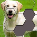 Hexa Jigsaw Puzzle - Android